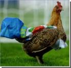 Курица протеста остановила матч английской премьер-лиги. Видео