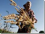 Цены на пшеницу показали рекордный рост с 2007 года