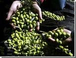 Цены на оливковое масло упали до минимума за 10 лет