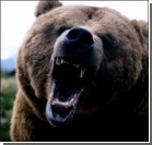 Два медведя разорвали рыбака на куски на глазах у отдыхающих