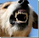 В Крыму собака разорвала трехлетнюю девочку