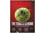 Опубликован полный геном томата