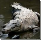 В Колумбии жили черепахи, питающиеся крокодилами