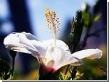 Цветки взяли пыльцу под контроль