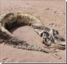 Загадочное доисторическое чудовище взорвало Интернет. Фото, видео