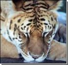 Невероятные гибриды животных. ФОТО