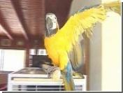 В Израиле следят за судьбой попугая-сквернослова Мири