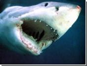 У берегов Бразилии акула напала на серфингиста