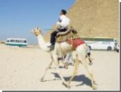 Верблюд вызвал аварию автобуса с российскими туристами в Египте