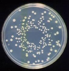 """Микробы в кишечнике человека превращают его в """"сверхорганизм"""""""