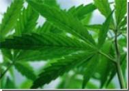 В Израиле создано лекарство от давления на основе марихуаны