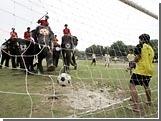 ЧМ-2006 вдохновил таиландцев на проведение матча между людьми и слонами