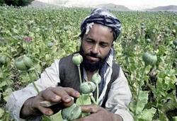 Брата президента Афганистана подозревают в связях с наркоторговцами