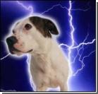 Живодеры живьем содрали с пса шкуру