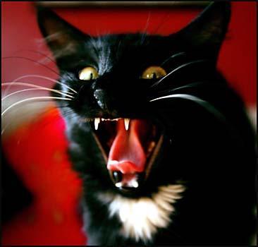 Кошка взяла в заложники своих хозяев