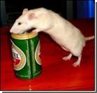 Инъекция в мозг и крыс к алкоголю не тянет