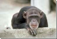 Испанский парламент предоставил обезьянам права человека