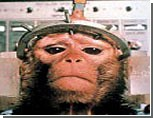 В Испании обезьянам предоставили права человека