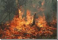 Турецкие отели эвакуируются из-за лесных пожаров