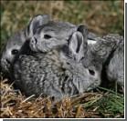 Женщину осудили за маниакальную любовь к кроликам