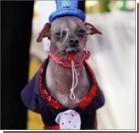Самой уродливой собакой в мире стал  пес из Британии