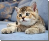 Cоветы для тех, кто собирается завести дома котенка