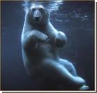 Белый медвель устроил в бассейне дебош. Видео