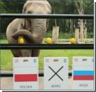 Краковская слониха-предсказательница сулит победу сборной Польши
