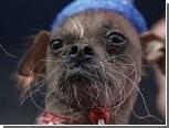 Самой уродливой в мире собакой признана китайская хохлатая