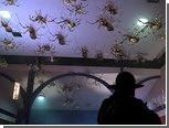 Ученые не поверили в нашествие пауков-убийц на индийский город