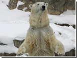 Белый медведь сбежал из вольера во время наводнения в Миннесоте
