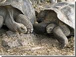 """В австрийском зоопарке распался 115-летний черепаший """"брак"""""""