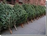 На Урале посадили убийцу продавца новогодних елок