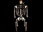 ДНК рассказала о связях между древними европейцами