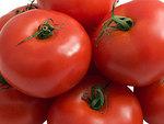Усилия селекционеров сделали помидоры безвкусными