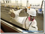 В Японии изобрели чудо бумагу, не пропускающую радиоактивное излучение