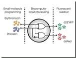 Клетки млекопитающих превратили в биокомпьютеры