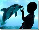 Гены дельфинов рассказали об эволюции мозга