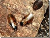 Обнаружен клещ, виновен в гибели миллиардов пчел