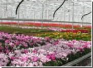 Растения помогут вычислить преступника