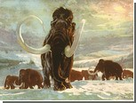 Ученые признали людей невиновными в вымирании мамонтов