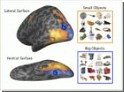 Как мозг сортирует большие и малые предметы