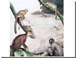 Предки человека и обезьян пришли в Африку из Азии
