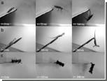 Акробатика гекконов и тараканов вдохновила создателей роботов