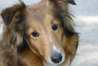 Британская собака спасена после месяца, проведеного на дне колодца