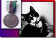 Британия чтит память кота-героя