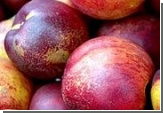 Улучшив фрукты, можно вылечить рак