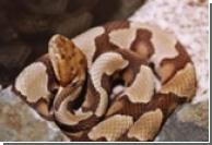 Спасение от змеиного яда находится внутри самих жертв