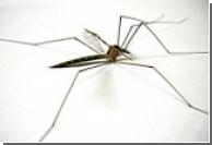 На Азовском побережье нашествие комаров