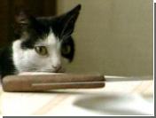 Житель Хельсинки, убивший соседку из-за кошек, получил пожизненный срок